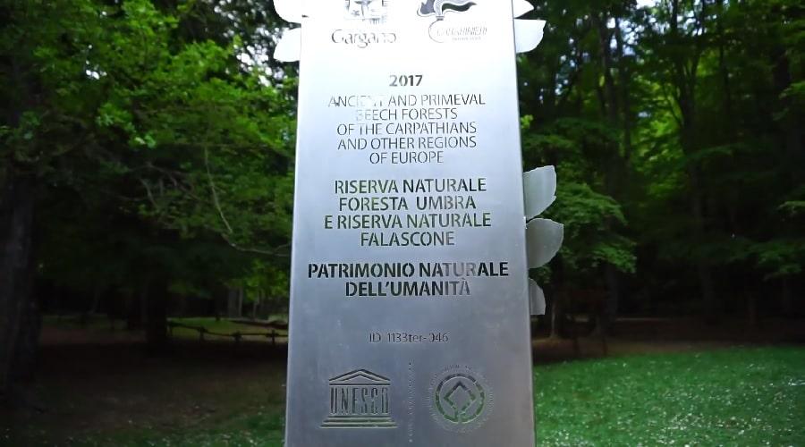 Лес умбра в парке Гаргано
